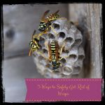 Getting Rid of Wasps Naturally