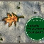 4 Steps to Winterize Your Garden