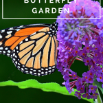 Butterfly Gardens Add Beautiful Variety to Your Lawn