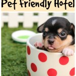 How To Find a Pet Friendly Hotel #travel