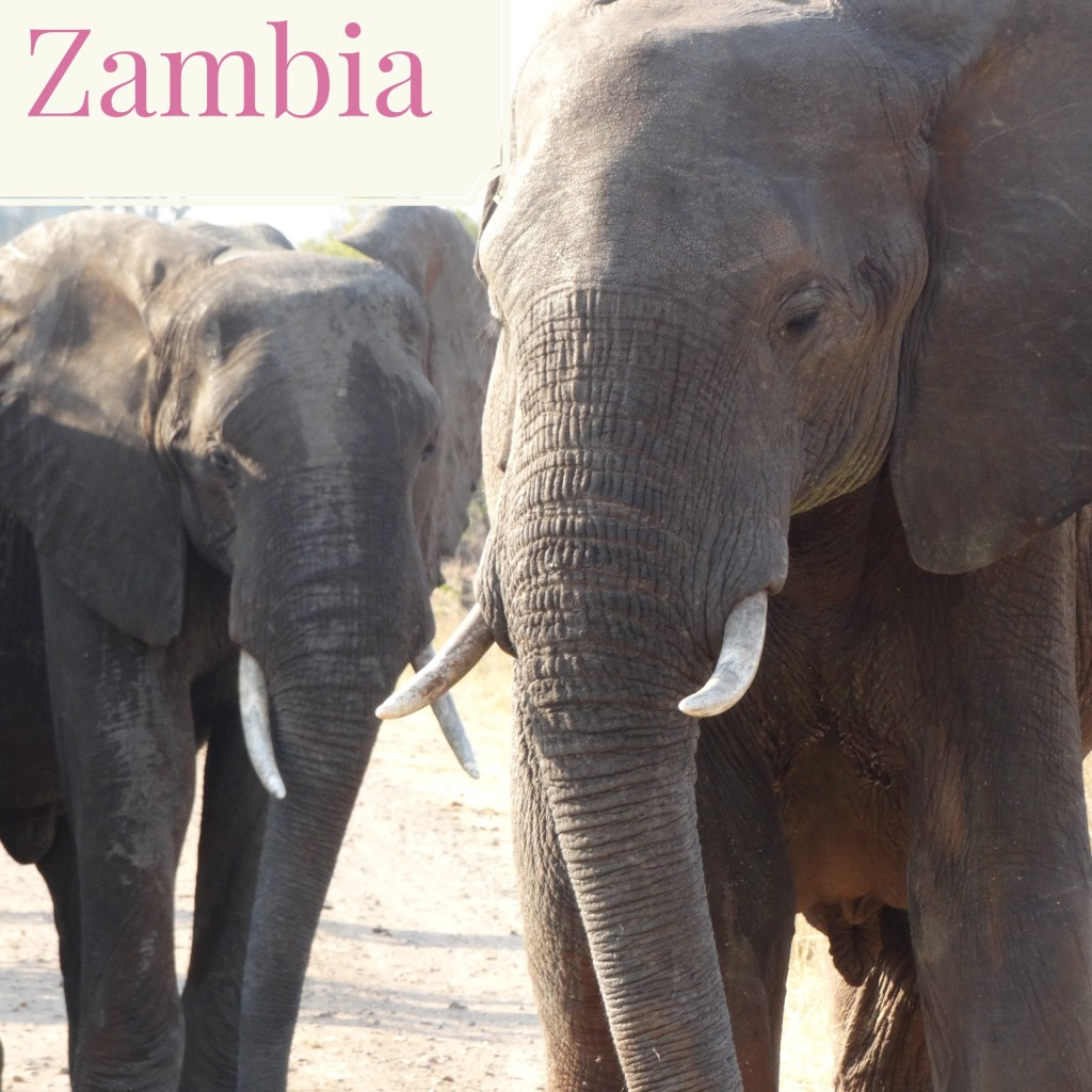 elephants_zambia_safari