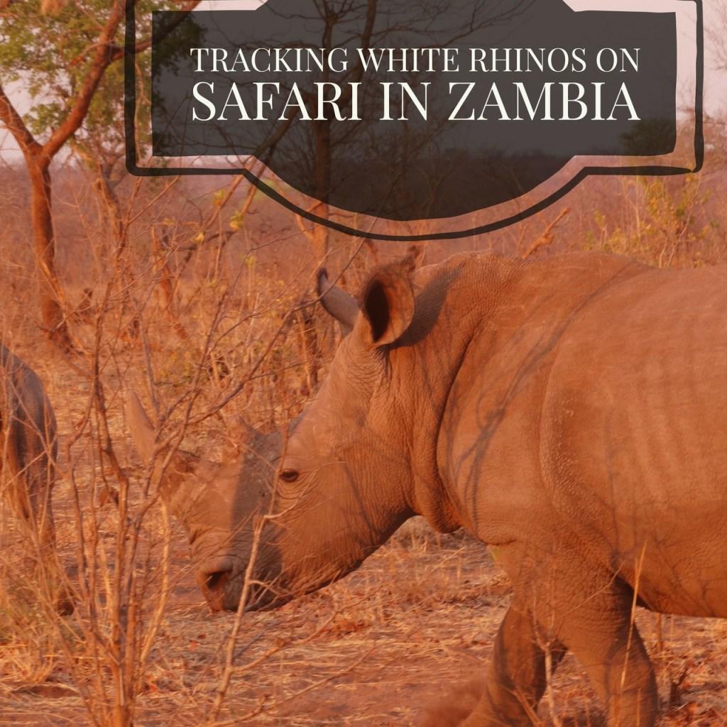 safari_adventure