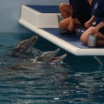 Clearwater Marine Aquarium – The Little Aquarium and Animal Rescue Centre With Heart