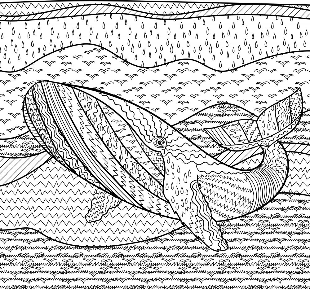 whale_colouring_page