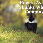 How to Avoid Skunks When Camping
