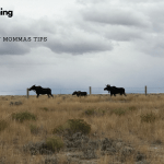 What is There to Do in Wyoming?