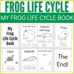Frog Life Cycle Educational Booklet