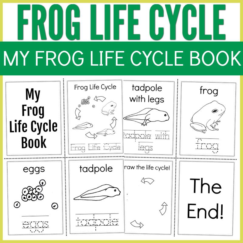 frog_life_cycle