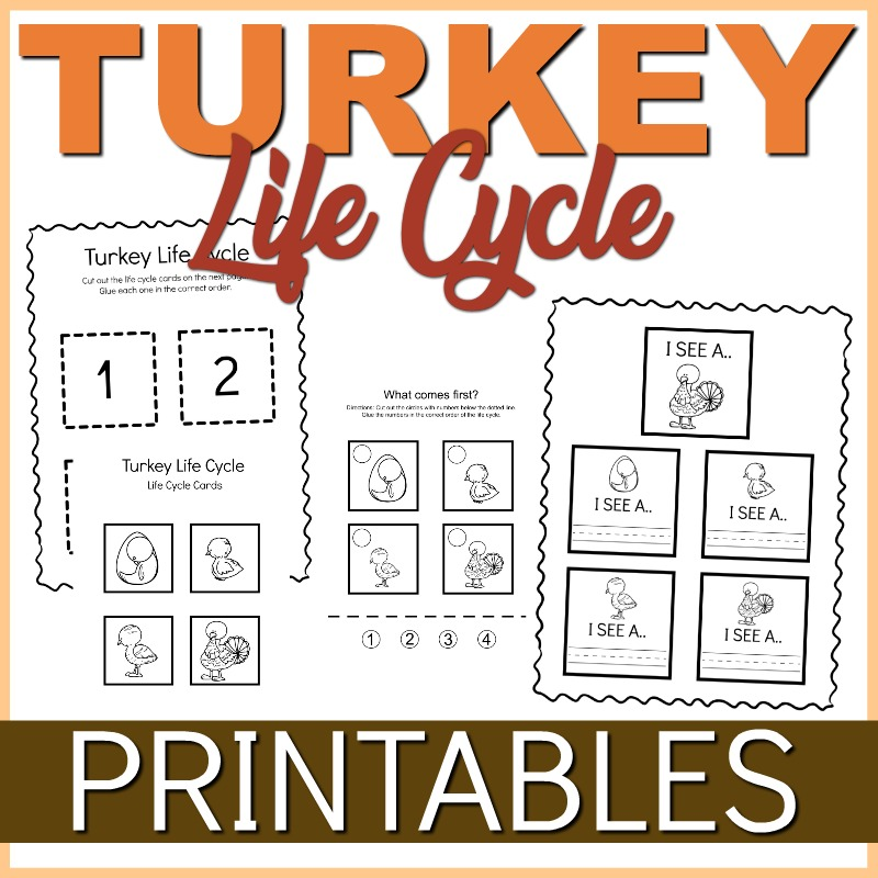 turkey_life_cycle_printable_thrifty_mommas_tips