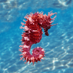 Seahorse Lifecycle and Facts – Activity Worksheet