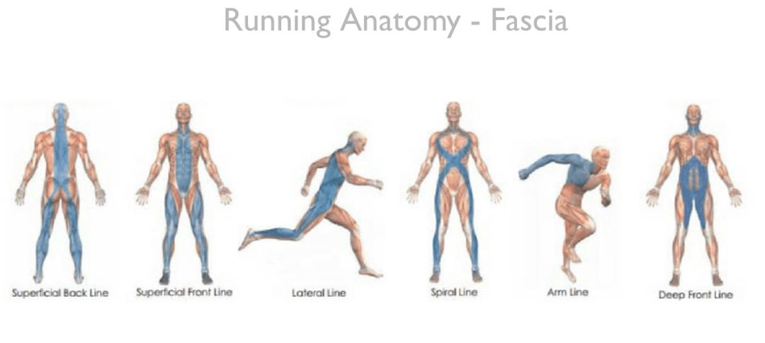 running anatomy fascia