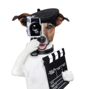 Dog shooting video