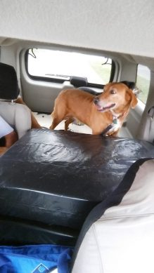 taking dogs to kennel (3)