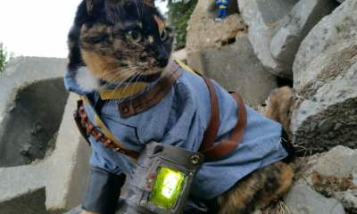 Fallout 4 cat cosplay