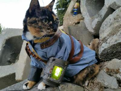 Fallout cat cosplay