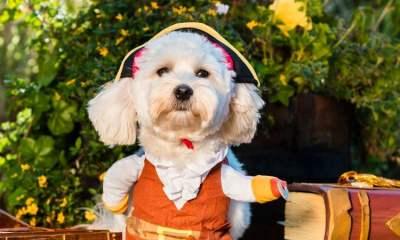 Dogs of Rare 2019 charity calendar