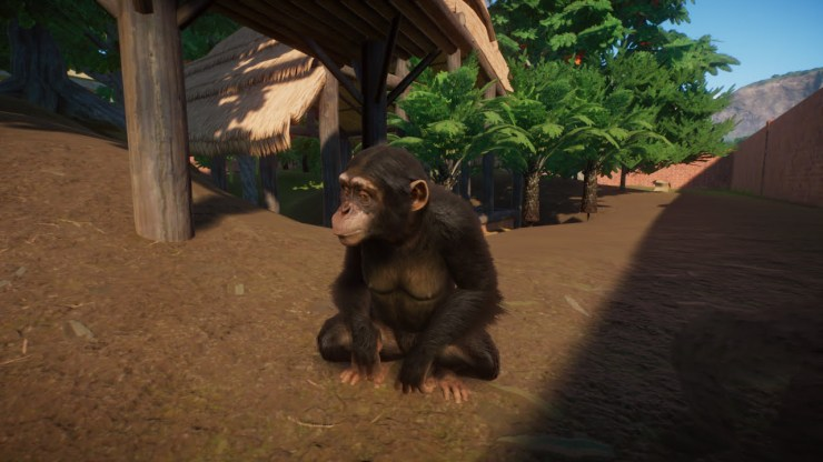 Planet Zoo chimpanzee