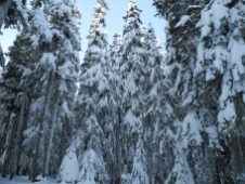 White Pass Dec 2012 015