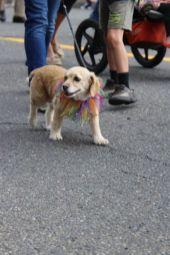 olympia pet parade 2013 - 06