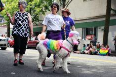 pride parade 2014