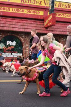 olympia pet parade 2014 - 02
