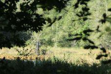 McLane Creek Nature Trail (5)