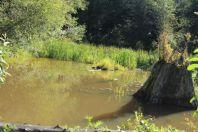 McLane Creek Nature Trail (8)