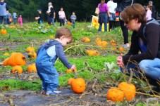 pumpkin Lattins Cider Mill Thurston County (151)