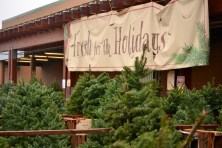 Haggen christmas trees