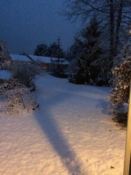 snow shelton