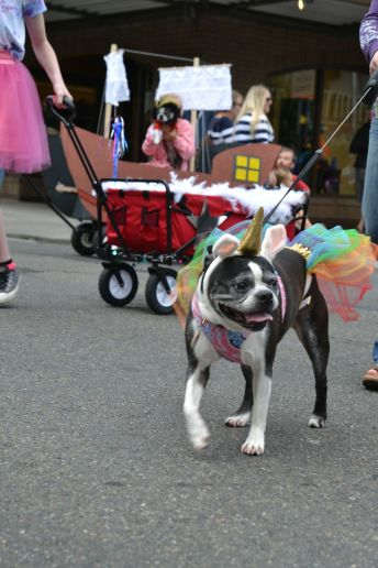 pet parade 36