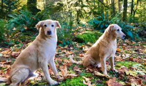 Dogs in the woods
