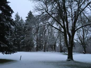 snow in olympia
