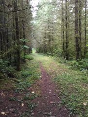 Scatter Creek Horse Trail 30