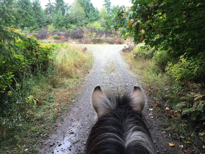 Scatter Creek Horse Trail 39