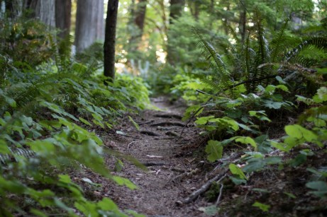 Hope Island Camping Washington State_5