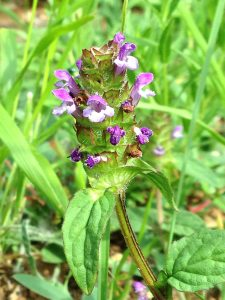 self-heal aude france