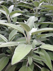 trouble sleeping natural aid sage