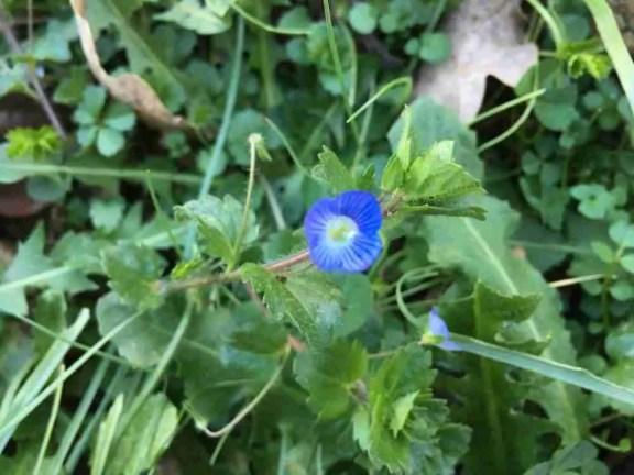 a drop of blue