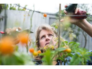 Article Tab: Master Gardener, Composter, and Sustainable and Edible Landscape Expert, Kay Havens, harvests tomatoes growing in her landscaped backyard. She also grows other varieties of tomatoes, onions, herbs, peppers and fruit trees.