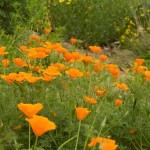 How to Create a Stunning Wildflower Garden Anywhere