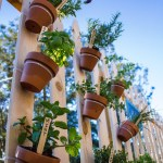 Save Space with Vertical Gardening
