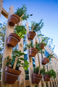 herb pots on a fence