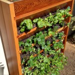 Vertical Gardening Update