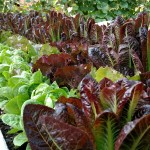 Garden Tips from a Backyard Farmer