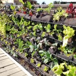 Garden Ideas from the Solar Decathlon