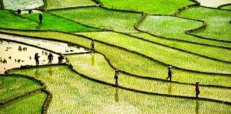 Goedkoopste vliegtickets Vietnam