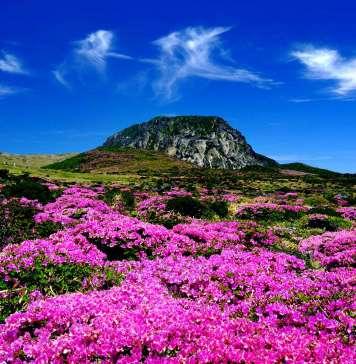 vliegtickets Jeju