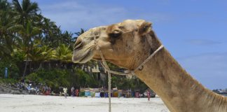 Mombasa vliegtickets