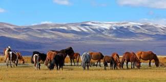 Mongolie vliegtickets